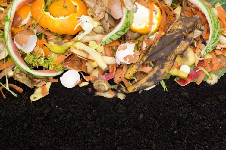 Ten Great Reasons to Start Composting