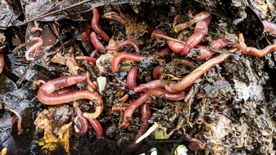Worms vs. Warming: Why Compost
